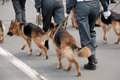 Police with dogs walking on the street Royalty Free Stock Photography