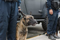 Policeman and dog on duty Royalty Free Stock Photo