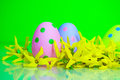 Polka dot easter eggs in spring forsythia blossoms Stock Images