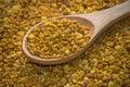 Pollen d abeille Photographie stock libre de droits