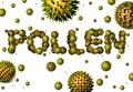 Pollen Royalty Free Stock Photo