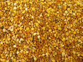 Pollen granules full frame Stock Images