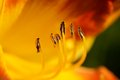 Pollination Stock Image
