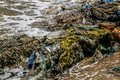 Pollution of the world`s oceans with plastic. Pacific ocean, USA Royalty Free Stock Photo