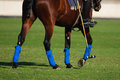 Polo sport Royalty Free Stock Photo