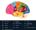 Polygonal brain function infografic this vector shows functions of different part of the cortex and cerebellum each icon Royalty Free Stock Images