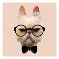 Portrait of Hipster Cat on Pink Stripes Backgr Royalty Free Stock Photo