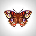 Polygonal and large beautiful butterfly