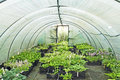 Polytunnel with plants Royalty Free Stock Images