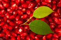Pomegranate background of seeds for your design Stock Photography