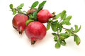 Pomegranate with branch Royalty Free Stock Photo