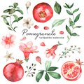 Watercolor set with pomegranate, flowers, leaves, half pomegranate, grains