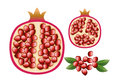 Pomegranate with grains and leaves vegetarian illustration of Royalty Free Stock Photo