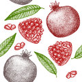 Pomegranate Hand Draw Sketch Background Pattern. Vector Royalty Free Stock Photo