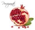 Pomegranate realistic illustration
