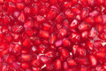 Pomegranate seeds Stock Images
