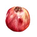 Pomegranate watercolor image of on white background Stock Photos