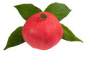 Pomegranate whole on green leaf Royalty Free Stock Image