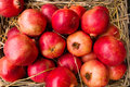 Pomegranates display punica granatum Royalty Free Stock Image