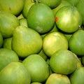 Pomelo (Citrus maxima or Citrus grandis) Stock Image
