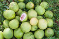 Pomelos Royalty Free Stock Photography
