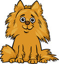 Pomeranian dog cartoon illustration of cute shaggy purebred Stock Photography