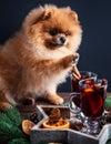 Pomeranian Dog In Christmas De...