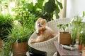 Pomeranian dog smile,animal playing outside smiles