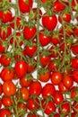 Pomodoro Di Pachino, Tomato Of...
