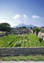 Pompeii italy vineyard at with vesuvius in the background Stock Photos