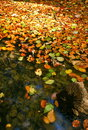 Pond in autumn Stock Image