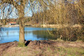 Pond bank with reed and tree along the water Stock Photos