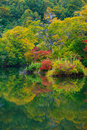 Pond in beech forest. Stock Image