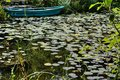 Pond with boat and water lilies Royalty Free Stock Photo