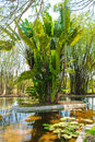 Pond designed as a landscaping element yucatan mexico Royalty Free Stock Photo