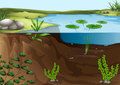 A pond ecosystem illustration of Royalty Free Stock Images