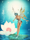 Pond fairy on waterlily Royalty Free Stock Photo