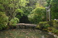 Pond in a japanese garden Royalty Free Stock Photo