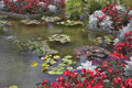 Pond with lilies Royalty Free Stock Photo