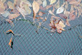 Pond net the photograph of a surface in autumn protected with a Royalty Free Stock Photography