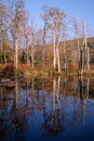 Pond reflections in autumn Royalty Free Stock Photo