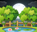 Pond scene at night time Royalty Free Stock Photo