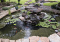 Pond with small waterfall, water lilies, and fish Royalty Free Stock Photo