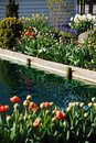 Pond and tulips Stock Images
