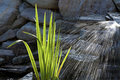 Pond water garden sun waterfals Stock Images