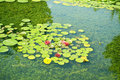 Pond with water lilies in the park Royalty Free Stock Photo