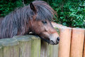 Ponies domestic and wooden fence Stock Photo