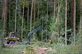 Ponsse Forest Harvester Felling a Large Spruce Tree