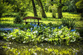 Pontederia cordata big and green hued leaved aquatic plant by the lakeside Stock Photography