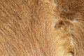 Pony beige fur textured detail image taken at the farm Royalty Free Stock Photos